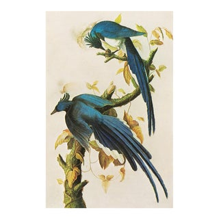 Columbia Jay by John J. Audubon, 1966 Vintage Chinoiserie Style Print For Sale