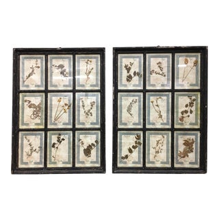 Pair of Italian Framed Botanical Herbarium Wall Hangings For Sale