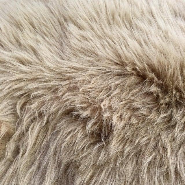 Modern Forsyth Tan Quad Sheepskin Rug - 3′7″ × 6′ For Sale - Image 3 of 4