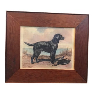 Black Lab Framed Print For Sale