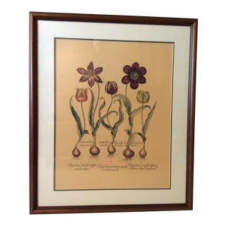 Heritage Editions Reproduction Hand-Coloured Copperplate Engraving by Basilius Besler For Sale