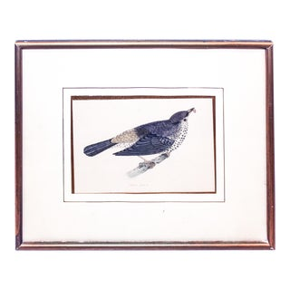 "Certified Original and Framed ""Missel Thrush"" Illustration of a Bird by F. O. Morris Circa. 1858 For Sale"