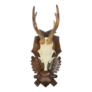 "Mounted European 15"" Roe Buck Antlers For Sale"