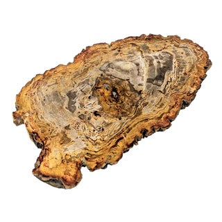 Arhaus Inspired Petrified Wood Tray For Sale