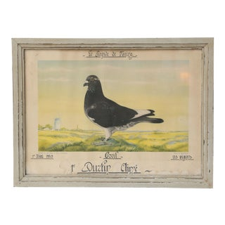 Belgian Colored Framed Pigeon Engraving For Sale