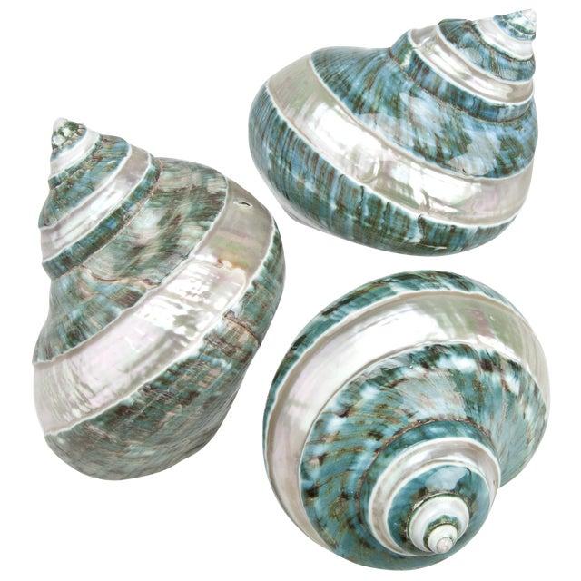 Polished Jade Turbo Shells - Set of 3 - Image 1 of 2