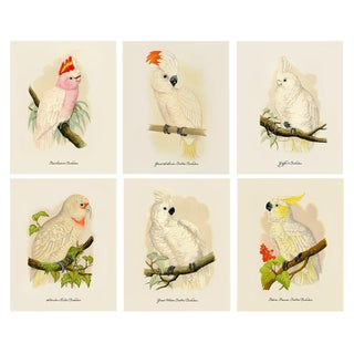 1884 Alexander Francis Lydon, Cockatoo Reproduction Prints - Set of 6 For Sale