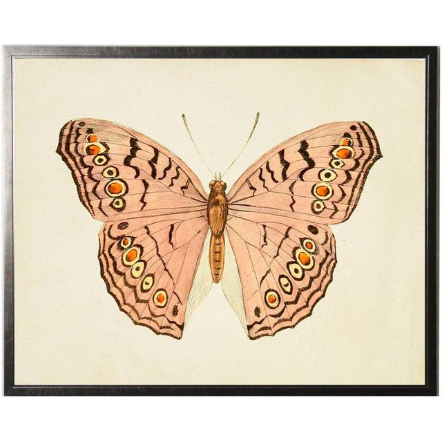 A horizontal pink butterfly print framed in a pewter shadowbox. 31.5x25.5
