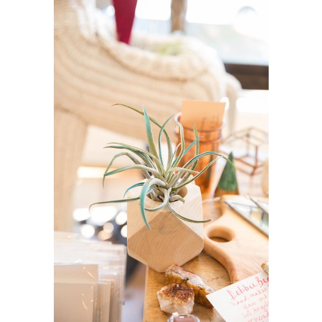 Old New House Air Plant Wooden Planter Antiqued White For Sale - Image 4 of 5