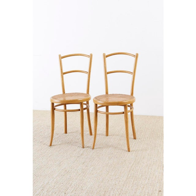 Traditional Pair of J. And J. Kohn Austrian Bentwood and Cane Chairs For Sale - Image 3 of 13