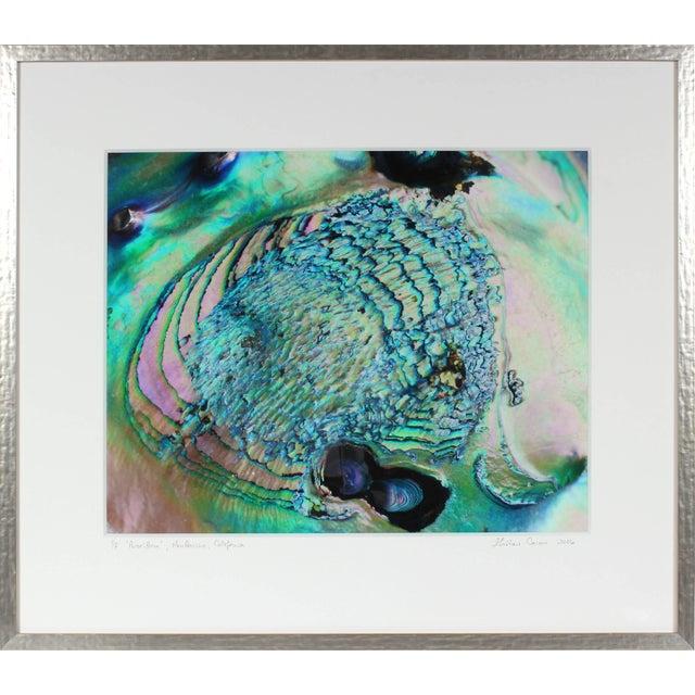 """Gaetan Caron Gaétan Caron """"Poseidon"""" (Framed) Micro Photograph, Abalone Shell, Mendocino Beach, California 2016 For Sale - Image 4 of 5"""