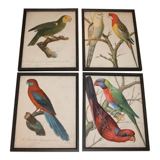 Framed Bird Wall Art Prints Pictures - Set of 4