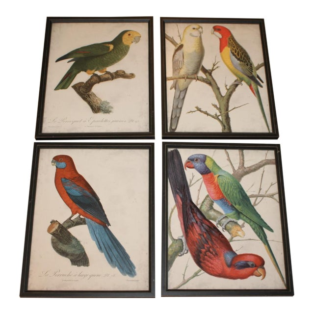 Framed Bird Wall Art Prints Pictures - Set of 4 - Image 1 of 9