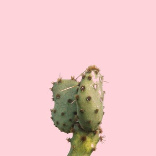 Prickly Pear on Pink Photograph