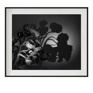 "Original Signed and Numbered ""Poppies I"" Contemporary Framed Photograph by Jean Karotkin For Sale"