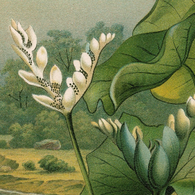 French Vintage Lily Pads Archival Print For Sale - Image 3 of 4