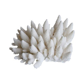 Large Natural Ocean Sea White Coral Specimen For Sale