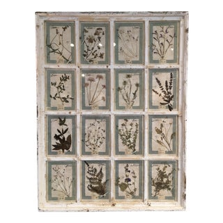 Large Framed Group of 12 French Pressed Botanical Specimens