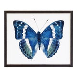 """Image of Blue and Green Butterfly - 32"""" X 16"""" For Sale"""