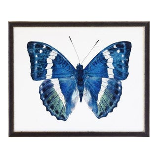 "Blue and Green Butterfly - 32"" X 16"""