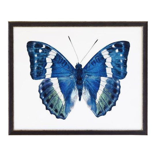 """Blue and Green Butterfly - 32"""" X 16"""" For Sale"""