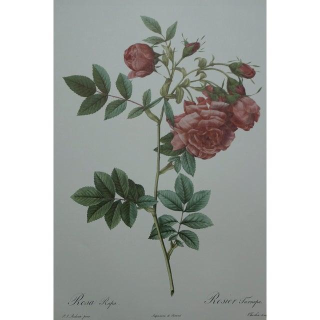Red Rose Botanical Print - Image 4 of 5
