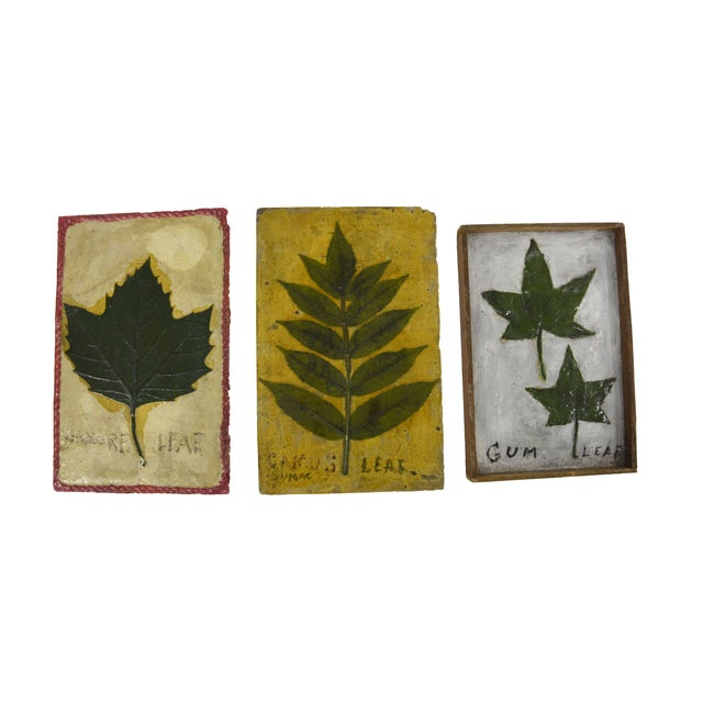 1930's Leaf Specimen Set - Image 4 of 5