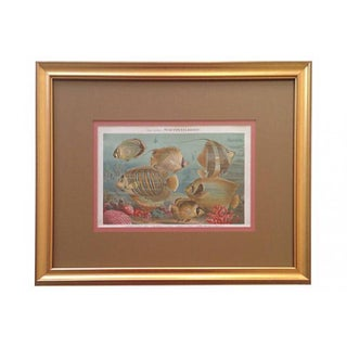 Tropical Fish & Coral Lithograph, 1887 For Sale