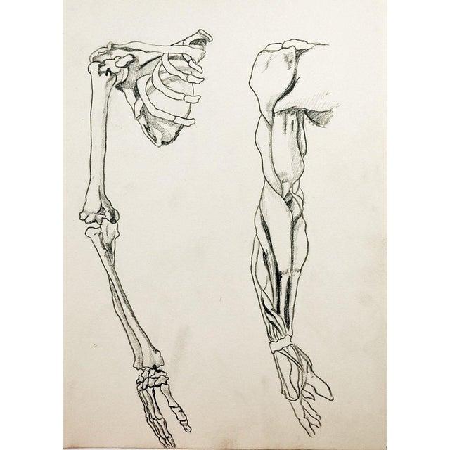 Anatomy Drawing | Chairish