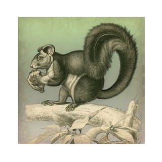 Vintage Nutty Squirrel Archival Print