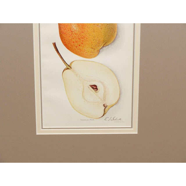 Architectural Digest Fruit Print For Sale In New York - Image 6 of 8