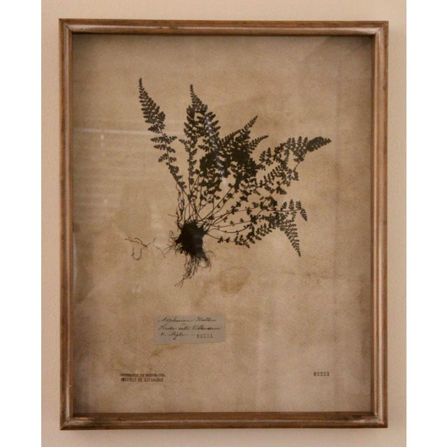 Botanical Prints in Reclaimed Wood Frames - a Pair For Sale - Image 4 of 7