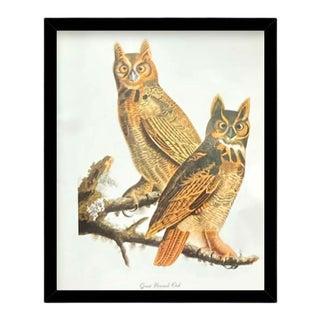 Custom Black Wood Frame of Authentic Vintage John James Audubon Great Horned Owl & Botanical Print For Sale