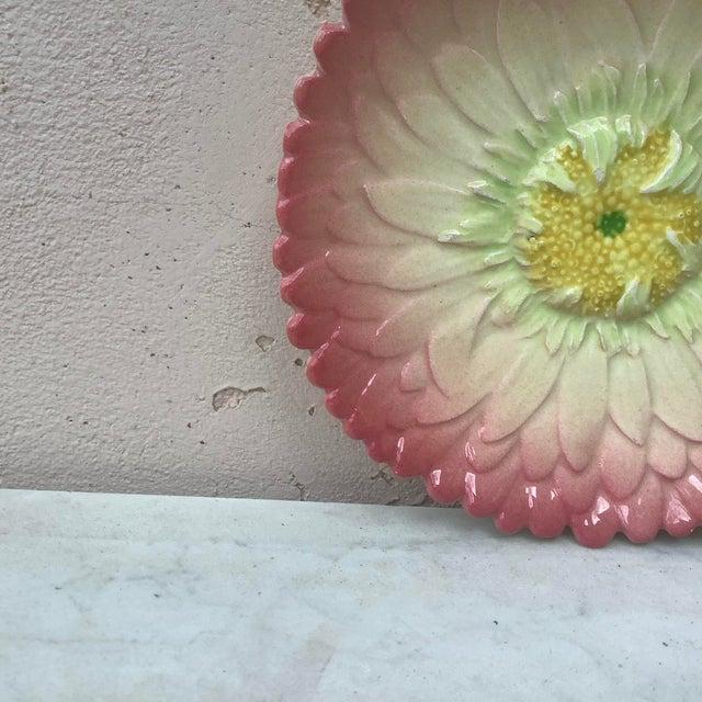 Majolica pink daisy plate Delphin Massier, circa 1890.