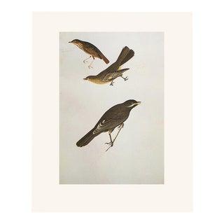 1966 Dwarf Thrush, Townsend's Ptilogonys, and Canada Jay by John James Audubon, Vintage Cottage Print For Sale