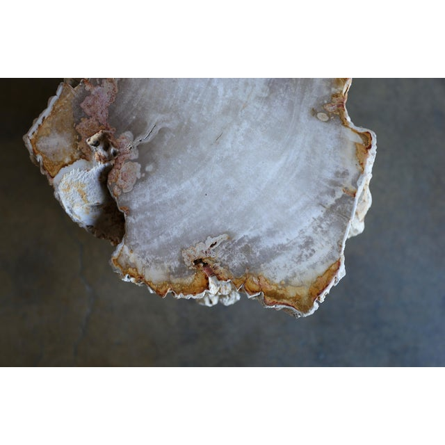 Petrified Wood Side Table For Sale - Image 9 of 12
