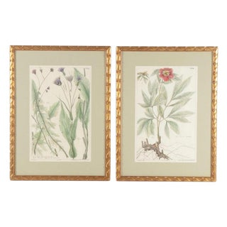 19th Century Hand-Colored Botanical Lithograph Pair For Sale