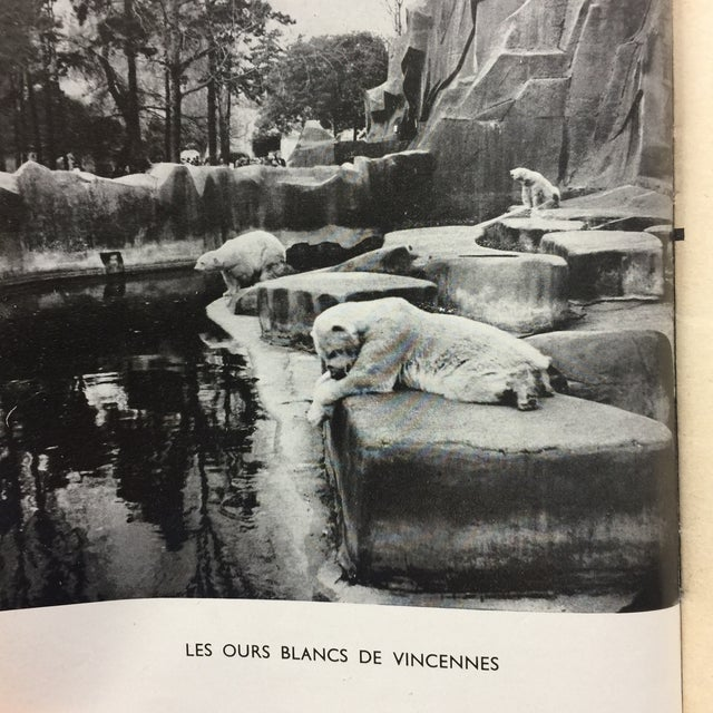 """Animaux Captifs French Zoos"" 1954 Book For Sale - Image 5 of 11"