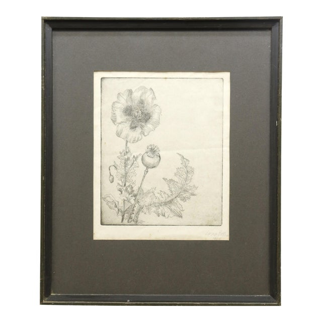 """1964 """"Poppies"""" Framed Etching on Paper by Lorna Bath, Framed For Sale"""