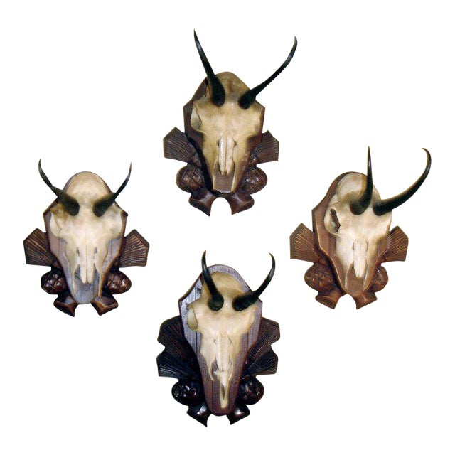 Collection of Four Black Forest Chamois Mounts of Carved Wood Plaques For Sale