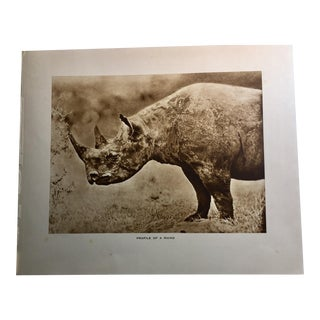 1920s Vintage African Safari Rhino Rotogravure Photographic Print For Sale