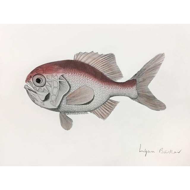 Vintage Original Freshwater Fish Couplet Gouche Painting For Sale - Image 4 of 6