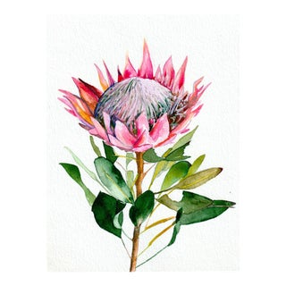 Christine Lindstrom Protea Original Watercolor Painting