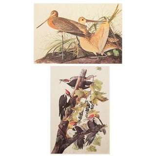 1966 Two-Sided Birds of America Lithograph Print by John James Audubon For Sale