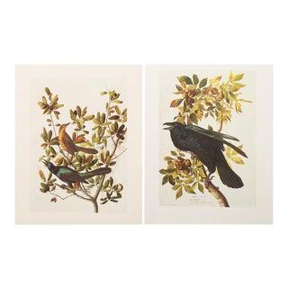 1966 Vintage Audubon Prints - A Pair
