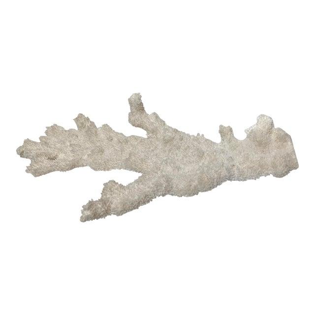 Stunning White Coral Fragment Specimen For Sale