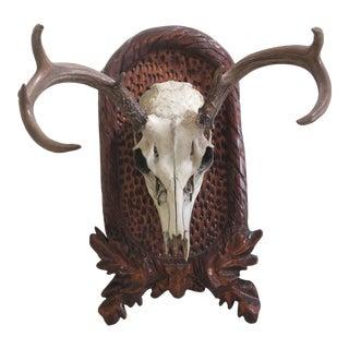 Decorative Mounted Deer Skull For Sale