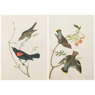 1960s Cottage Lithographs of Bids of America by John James Audubon - a Pair