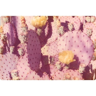 """Lavender Cacti"" Vintage Photo Print For Sale"