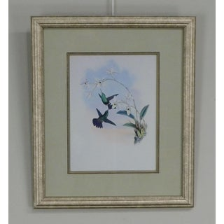Quality Framed Print of 2 Hummingbirds Preview